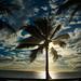 Palm Silhouette