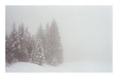 * (Daniel Espinoza) Tags: agfa400 nikonfe white film fog onlyfilm winter snow suisse suiza schweiz switzerland filmphotography 35mmfilm analogphotography danielespinoza minimalist landscape landschaft