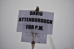 London 2018 – David Attenborough for P.M. (Michiel2005) Tags: england engeland grootbrittannië greatbritain britain uk vk unitedkingdom verenigdkoninkrijk london londen sign bord davidattenborough brexit protest parliament