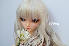 DSC_2036 (sonya_wig) Tags: fairytreewigs wig bjdwig minifeewig bjd bjdminifee minifeechloe handmadedoll bjddoll dollphoto fairyland fairylandminifee minifee chloe bjdphotographycoloringhair