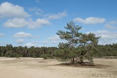 DN9A4277 (Josette Veltman) Tags: ommen sahara wandeling overijssel vechtdal vecht canon 7dii 24105mm
