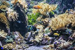 Peces de ciudad 4 (lebeauserge.es) Tags: madrid españa naturaleza zoo animal acuario agua pez
