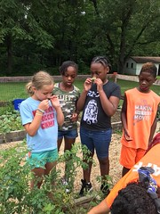 Day camp peace garden 2018