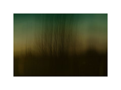 After-Sunset (ICM's) Tags: painterly multipleexposure longexposure landscape blur abstract woodland trees icm intentionalcameramovement