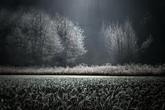 RAGGIO DI LUCE (Zz manipulation) Tags: art ambrosioni zzmanipulation luce foresta alberi erba campagna natura