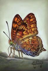 Butterfly (irishishka) Tags: butterfly animals insects art artirishishka realism pastelpainting figurative drawing