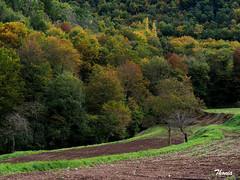 La Garrotxa (Gatodidi) Tags: garrotxa girona banyoles bañolas santa margarida volcan camino arboles bosque montaña verde otoño catalunya landscapes paisaje naturaleza natura paisatge