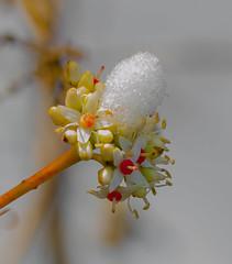 Stacked up. (Omygodtom) Tags: scene snow outside oregon meadow tamron90mm tamron dof bokeh d7000 tannersprings natural nikkor flora flickriver existinglight