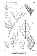 beitrgezurpal02wien_0185 (kreidefossilien2) Tags: velenovský bohemiancretaceousbasin bohemian czech republic palaeobotany flora kieslingswalde