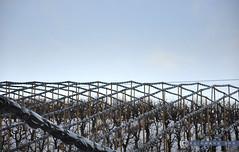 Niederösterreich Weinviertel Oberfellabrunn_DSC0984 (reinhard_srb) Tags: niederösterreich weinviertel oberfellabrunn winter schnee eis kälte frost obstplantage bäume gitter abdeckung schutz