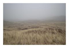 Husby Klit, Denmark, 2019 (csinnbeck) Tags: 22mm 35mm canon denmark fog mist foggy fields roads road winter february north sea digital landscape jutland westcoast west eosm grass sand field sky m10 eos dune dunes eosm10