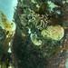 Underwater at Portsea Pier-12