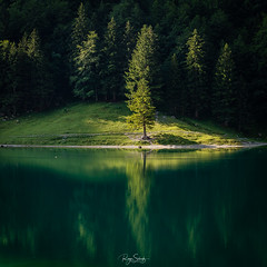 Tree (schuetz.photography) Tags: wasserauen appenzellinnerrhoden schweiz ch swiss swissalps lake forest europe world nature landscape seealpsee see tanne wald wasser green sony a7 a7rm2 a7rii 24105 mirrorless ilce appenzell switzerland alps