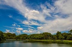 Parque do Ibirapuera - Ibirapuera Park, São Paulo (de Paula FJ) Tags: áreaverse parquedoibirapuera ibirapuerapark trees árvores verde green blue azul céu sky caminhada walkinginthepark bicicletas lago pássaros nikon nikond7000 nikkor1685mmafs