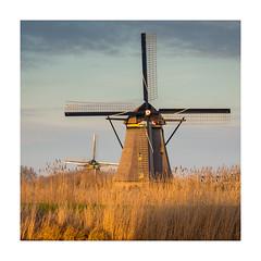 Golden hour at Kinderdijk II (Rob Schop) Tags: kinderdijk tele sonya6000 sony55210oss handheld lrcc zuidholland goldenhour windmill 11 square composition