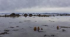 Another day by the fjord. (Trond Sollihaug) Tags: vinge skatval stjørdal trøndelag trondelag norway tronfhrimsfjotd fjord seaside beach water winter seaweed
