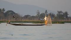 equilibriste (Patrick Doreau) Tags: pêcheur nasse filet fishing eau water lac lake chapeaun bateau boat birmanie myanmar asie asia inlé paysage