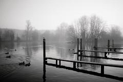 (a.pierre4840) Tags: olympus om2n zuiko 24mm f28 ilford ilfordfp4 35mmfilm bw blackandwhite monochrome noiretblanc river riverthames mist fog reflections trees birds atmosphere atmospheric