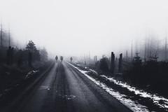 Auf dem Weg der Einsamkeit (Gruenewiese86) Tags: 2018 harz hütte november sony a6500 wald forest forestscape fog nebel angst tod tot geheimnisvoll mystisch mystical germany holz baum himmel landstrase