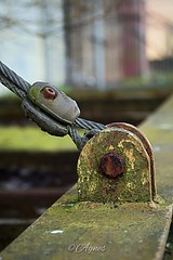 Hou vast... #2019#assen#havenkade#rustednail#nail#cable#keepittogether#macrophotography#rail#factory#building#old#historic#moodygrams#street#streetphotography#city#cityphotography#photography#photooftheday#love#daily#pics#metal#see#explore#outdoor#urban#l (agnes.postma.hoogeveen) Tags: photooftheday love loveit moodygrams havenkade city streetphotography building see macrophotography street cityphotography rustednail cable pics factory historic explore nail keepittogether assen old rail metal outdoor 2019 urban daily photography