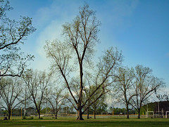 Trees Begin To Bud. (dccradio) Tags: lumberton nc northcarolina robesoncounty outdoor outdoors outside nature natural park citypark raymondbpenningtonathleticcomplex penningtonathleticcomplex northeastpark april weekend saturday saturdaynight saturdayevening evening goodevening spring springtime hp hewlettpackard hpdsccb350 tree trees treebranch branch branches treebranches treelimb treelimbs sky eveningsky