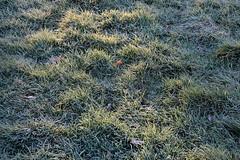 Lever-du-jour-et-givre (RS...) Tags: sunrise soleillevant herbe grass frost givre d7200