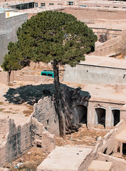 Lone Tree (mopics347) Tags: centralasia central asia house tree pine pinetree green tall skinny crumbling old historic ruins decay urban outdoor brown brick mud