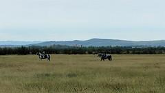 Horse riding (BernardusM) Tags: costabrava horse pyrenees landscape