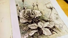 2019-03-28_11-56-24 (alratan) Tags: flower цветок роза графика rose