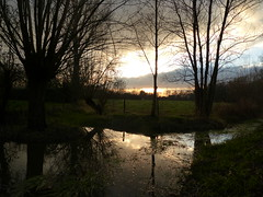 Sunset (1) (Marit Buelens) Tags: landscape sunset belgium belgië vlaanderen westvlaanderen flanders brugge bruges willow pollardwillow knotwilg wilg ditch beek brook pool gemeneweidebeek naturereserve natuurgebied water field meadow weide assebroek sintkruis winter