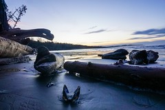 Shit is real. (Mjg.604) Tags: beautifulcanada beautifulbc britishcolumbia canada bc discoverbc explorebc sunrises earlymornings adventures goexplore bcbeaches lowlightphotography lowlight wickaninnishbeach tofinobc tofino vancouverisland thepacific pacificocean shorelines coasts pacificbeaches leftcoast westcoast pacificrimnationalparkreserve bealpha sonyalpha sonya6000 a6000 sonyphotography bluehour blueskies shells driftwood thesea sea water sand beaches