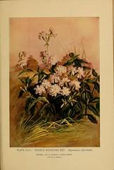 Anglų lietuvių žodynas. Žodis family caryophyllaceae reiškia šeimos caryophillaceae lietuviškai.