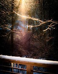 cold view (bidutashjian) Tags: winter cold ice frozen trees outside outdoors nature weather icicle icicles light dreamy moody nikon d3500 creative magic bidutashjian