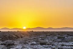 _RJS4715 (rjsnyc2) Tags: 2019 africa d850 desert dunes landscape namibia nikon outdoors photography remoteyear richardsilver richardsilverphoto safari sand sanddune travel travelphotographer animal camping nature tent trees wildlife