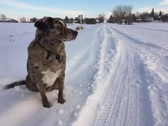 I'm Waiting For My Ride, Man (cogdogblog) Tags: felix now dog wait sit