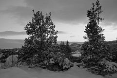 Winter Monochrome (steve_whitmarsh) Tags: aberdeenshire scotland scottishhighlands highlands craigendarroch winter snow mountain hills trees forest blackandwhite bw monochrome cairngorms topic