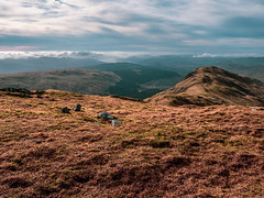 Towards Loch Fyne - Feb 2019 (GOR44Photographic@Gmail.com) Tags: loch fyne beinnbhuidhe munro argyll scotland gor44 hills mountains cloud grass panasonic olympus 1240mmf28 g9 sky rocks
