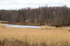 7K8A2497 (rpealit) Tags: scenery wildlife nature weldon brook management area
