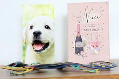 bubbly (Gillian Everett) Tags: birthday 2019 cards gecko 365