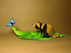 Origami Raccoon dog (J.V origami) Tags: origami raccoon dog satoshi kamiya javier vivanco ica peru