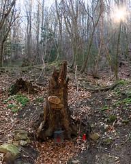 Waldquelle (Don Claudio, Vienna) Tags: waldquelle brunnen riederberg wienerwald gablitz klosterruine ruine kloster franziskaner