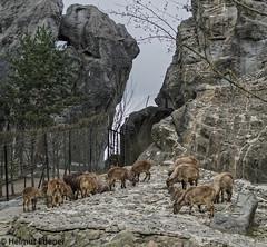 HH, Tierpark Hagenbeck (bleibend) Tags: 2019 em5 leicadgsummilux25mmf14 omd hagenbeck hagenbeckstierpark hamburg hansestadt m43 mft natur nature olympus olympusem5 olympusomd park zoo