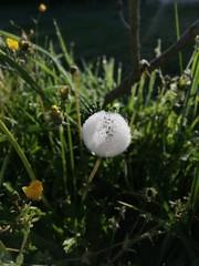 Bola de nieve (eitb.eus) Tags: eitbcom 41547 g1 tiemponaturaleza tiempon2019 flora bizkaia mungia angieschulte