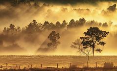 Terras de Soneira (Noel F.) Tags: sony a7r a7rii ii fe 100400 vimianzo soneira galiza galicia neboa fog mist sunrise mencer