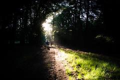 HogeVeluwe_zonsopkomst2 (Tim MLDR) Tags: 2018 hogeveluwe natuur veluwe forest nature contrast sunrise sunlight netherlands
