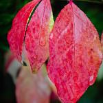 Burning Leaves thumbnail