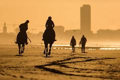 Horses intothesun (Drummerdelight) Tags: sunset beach dehaan intothesun sun setting shillouettes