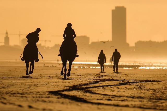 Horses intothesun