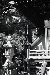 A scene in Sumiyoshi shrine,Kawasaki city 2018/12 No.1(taken by film camera). (HIDE@Verdad) Tags: leica leicaa elmar elmar5cm elmar5cmf35 orientalseagull400 seagull400