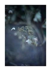 2019/1/20 - 3/9 photo by shin ikegami. - SONY ILCE‑7M2 / Voigtlander NOKTON CLASSIC 40mm f1.4 SC VM (shin ikegami) Tags: asia sony ilce7m2 sonyilce7m2 s7ii 40mm voigtlander nokton nokton40mmf14sc tokyo photo photographer 単焦点 iso800 ndfilter light shadow 自然 nature 玉ボケ bokeh depthoffield naturephotography art photography japan earth